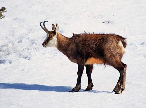 Valloire randonn es raquettes neige le plan du fer - La poutre valloire ...